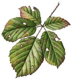 Julia Trickey leaf painting
