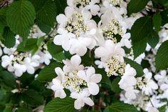 Gardens at RHS Chelsea Flower Show / RHS Gardening