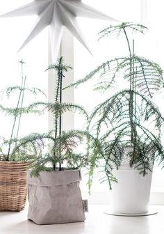 huonekuusi - Google-haku Christmas Inspiration, Christmas Time, Plants, Inspired, Google, Planters, Plant, Planting
