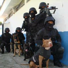 First police dog in line - a pit bull!a PIT BULL! Military Working Dogs, Military Dogs, Police Dogs, Pit Bulls, I Love Dogs, Cute Dogs, American Pit Bull Terrier, Game Mode, Mastiff