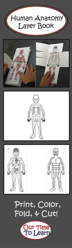 Color, fold, and cut to make this engaging anatomy booklet - good for a first look at the body and it's layers. From Our Time to Learn, k-2