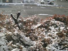 こんにちは。天候は、晴れ。今朝の雪です。路面は凍らず、ほぼ解けました。今日もよろしくお願いします。 #雪 #snow #hi #你好 #안녕하세요 #Привет #สวัสดี #sunny #Thursday #如月 #February