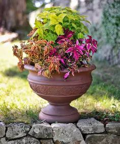 Coleus Plants: Varieties, Care & Growing Them - This Old House Container Plants, Container Gardening, Coleus Care, Garden Plants, House Plants, Endless Summer Hydrangea, White Flower Farm, Yellow Leaves, Potting Soil