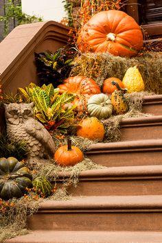 Fall Entryway Decor, Fall Home Decor, Pumpkin Decorating, Porch Decorating, Pumpkin Floral Arrangements, Fall Window Boxes, Fall Porches, Halloween Baskets, Garden Whimsy