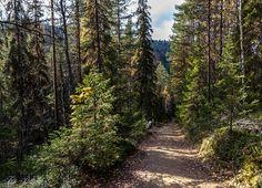 ** Light Descriptions / My Photos: Posio, Korouoma Birch Rapids, Saukkovaara and Kuulea