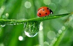 Lady Bug 🐛  🐛   🐛