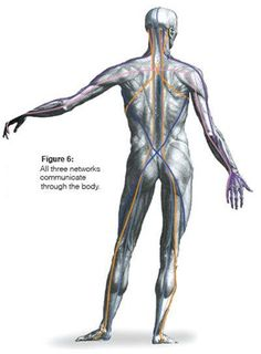 by Thomas Myers contributing author to Dynamic Body Read this very informative chapter in its entirety in the Dynamic Body Textbook The book is also a par