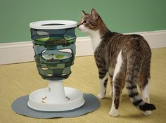 Even Indoor Cats Can Hunt For Their Food With Catit Senses Treat Maze  ... see more at PetsLady.com ... The FUN site for Animal Lovers