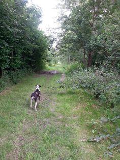 Sascha ziet een hertje