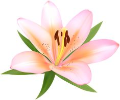Lily Wallpaper, Tropical Flowers, Art Images, Tinkerbell, Flower Art, 3 D, Projects To Try, Clip Art, Deco