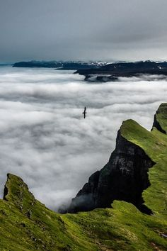 Seacliffs in Iceland   by Jorge Ortega