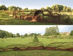 Outdoor Art: 37 m long and up to 3,5 m high, made of willow, situated in Pasewalk, Germany