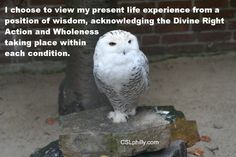 """""""I choose to view my present life experience from a position of wisdom, acknowledging the Divine Right Action and Wholeness taking place within each condition.  
