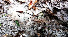 #neve #primi #fiocchi