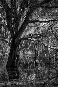 Photo by Lynne Buchanan. Myakka River State Park, Anna Maria Island, State Parks, Discovery, Past, My Photos, To Go, Florida, Spaces