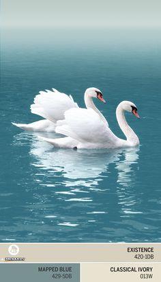Gorgeous beautiful swan photo of birds. Beautiful Swan, Beautiful Birds, Animals Beautiful, Swan Pictures, Animal Pictures, Beautiful Pictures, Pretty Birds, Love Birds, Swans