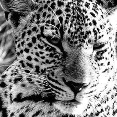 Unglaubliche Erlebnisse die ich nie megr vergessen werde!! Safari, Animals, Left Out, Animales, Animaux, Animal, Animais