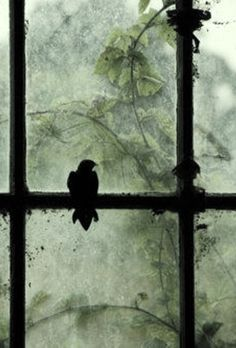 Everyone deserves a perfect world! Shades Of Green, Green And Grey, Crows Ravens, Through The Window, Perfect World, Belle Photo, Green Colors, Images, Silhouette