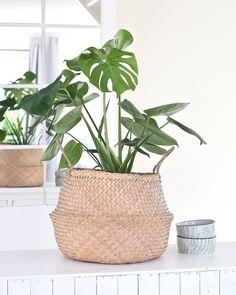 Gatenplant (Monstera deliciosa) #planten #groenleven #urbanjungle Monstera Deliciosa, Planting Succulents, Planting Flowers, Diy Plante, Plant Texture, Green Bubble, Inside Plants, Live Plants, Decoration