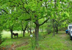 Roumavagi Farm Campsite, Luberon, Provence