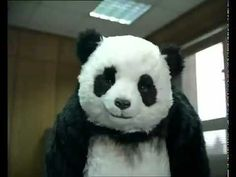 Panda in the office - YouTube