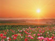 Flowering Field - http://imashon.com/w/flowering-field.html