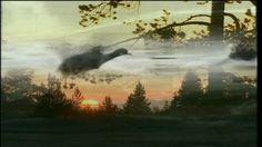 Syksy saapuu, lehdet putoavat puista ja muuttolinnut lähtevät. Mitä luonnossa tapahtuu syksyn saapuessa?