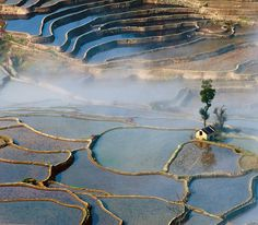 Rizières en terrasse (subak) Bali - Indonesie