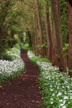 """lotrscenery: """"The Old Forest in the Shire - Cornwall, UK """" Forest Path, Forest Trail, Woodland Garden, Meadow Garden, Nature Aesthetic, Walk In The Woods, Garden Paths, Nature Pictures, Pathways"""