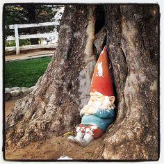 sleeping gnome.