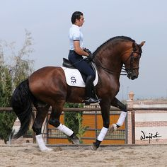 Andalusian... In my dreams I ride around dressage arenas in Andalusians... Wow!