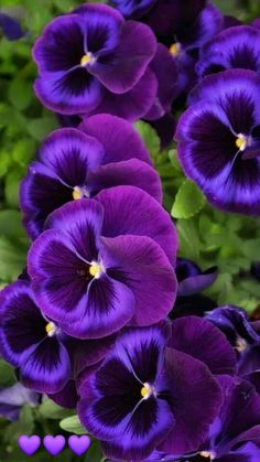 Excellent Photographs purple garden planting Strategies : Section of the entertainment associated with arranging the garden is actually picking which in turn seeds versions you would like to grow. Purple Flower Tattoos, Purple Flower Bouquet, Small Purple Flowers, Purple Wedding Flowers, Exotic Flowers, Amazing Flowers, Pretty Flowers, Pansy Flower, Flowers Bunch