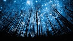 trees and stars.  Beautiful.  By Robert Llewellyn
