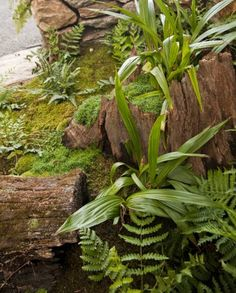 stumperies garden decorations and yard landscaping ideas recycling wood....would be nice for my fairy garden