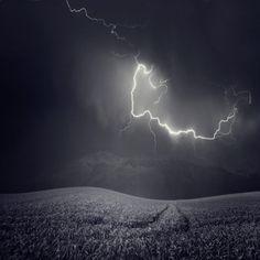 Zootz Photographic Print