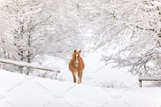 Alone red-haired foal in a snow-cove by konstantin.tronin on @creativemarket