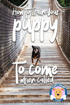 Do you need to train your new puppy? How to train your puppy to come when called. Training a new puppy to come when called is important first step. Check out these puppy training tips to help get your started. #PuppyPowerClub #puppies #puppytraining #puppy