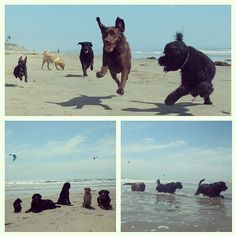 Another successful #beachtrainingday with trainer Jeff! Rooney, Tootsie, Herman, Charlie, and Ducan went all out! #dogtraining #dogbeach #fitdogs #huntingtondogbeach #Dogfitness