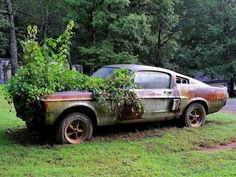 PsBattle: Plants growing over a Ford Mustang Ford Mustang Shelby Gt500, 1967 Shelby Gt500, Mustang Bullitt, Nissan Skyline, Skyline R34, Abandoned Cars, Abandoned Places, Toyota Supra, Lamborghini