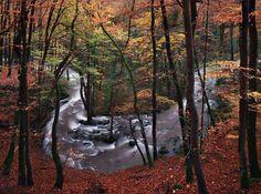 色覚障害のカメラマンが映し出す自然は、グリム童話のような美しさ(画像)