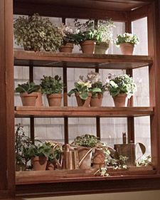 The Right Plant in the Right Light - Martha Stewart Home & Garden