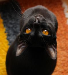 Autumn's black cat.....