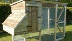 Build A DIY Chicken Coop