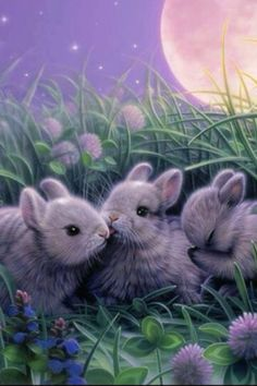 Rabbits are clever and cute :)))