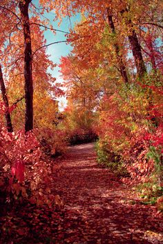 I am always enamoured by the beautiful autumn leaves and the crisp fall air~