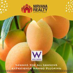 Feast on the Mango http://amp.gs/CsqL #nirvanrealty #wollywood #bigboss #bigbossmarathi #cityofmusic #RealEstate #Realtor #Realty #Broker #ForSale #NewHome #HouseHunting #MillionDollarListing #HomeSale #HomesForSale #Property #Properties #Investment #Home #Housing #Listing #Mortgage #CreditReport #fruits #mango