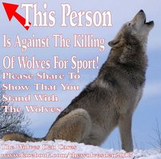 Hunting for sport, by air, den slaughter, & leg traps have too stop NOW....