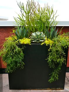 clean lined, metal container was screaming for some texture. Using a combination of agaves and assorted succulents. Succulents In Containers, Container Plants, Cacti And Succulents, Planting Succulents, Container Gardening, Succulent Gardening, Garden Planters, Metal Planter Boxes, Pot Jardin