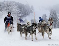 Mushing in the Lleida Pyrenees (Spain). www.lleidatur.com     Photography: @ROCAMONTSERRAT