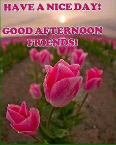 Good Afternoon!
